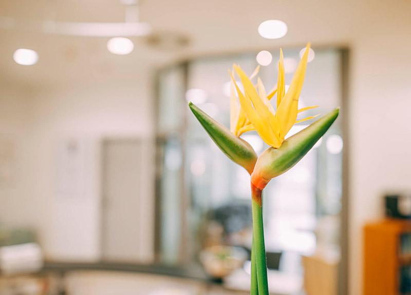 Blumen schaffen eine wohlige Atmosphäre in der Zahnarztpraxis Plugmann